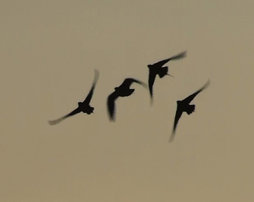 Flying birds in Spain