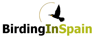Birding In Spain old logo