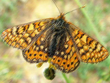 The Birding In Spain butterfly list of 2014
