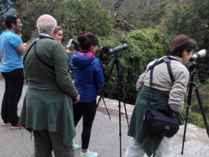 Watching Brown Bears in Asturias