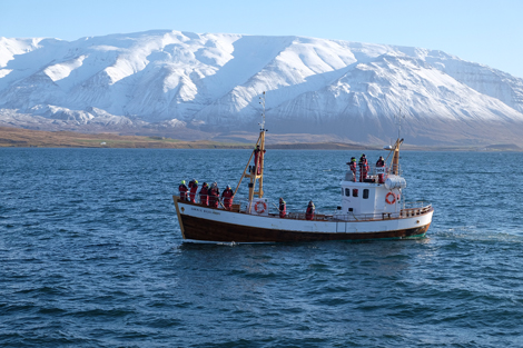 Whale-watching boat and fjord, Iceland