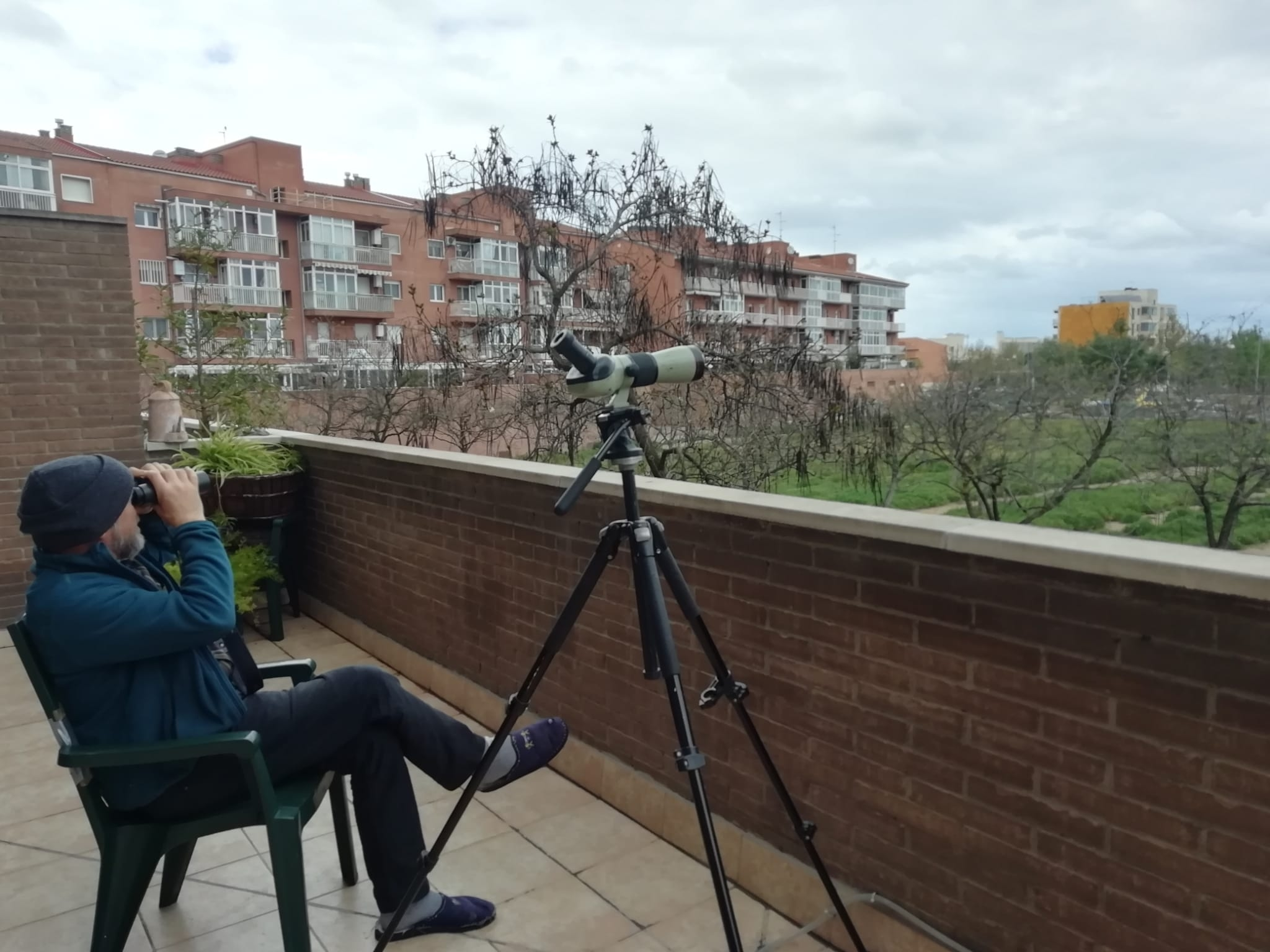 Balcony birding in Lleida