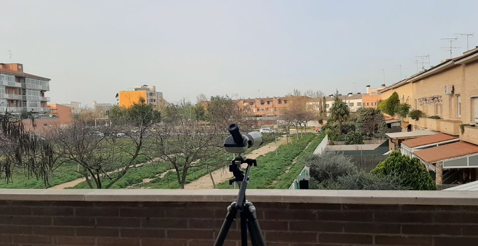 Lockdown balcony birding
