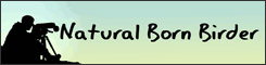 The Natural Born Birder website