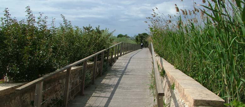 Birding In The S Albufera Natural Park Itinerary 1 2